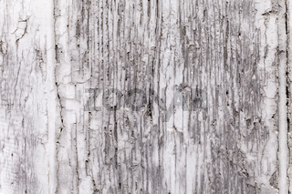 Gray Coat Of Paint On Weathered Wooden Shutter