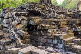 banyan tree in ruin Angkor Wat, Siem Reap, Cambodia.