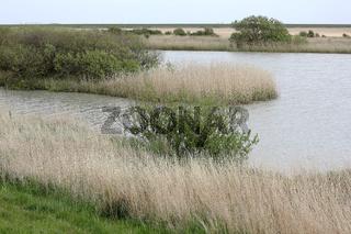 Das Vogelschutzgebiet Rantumbecken auf Sylt