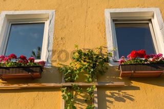 Fenster mit Pelargonien in Blumenkisten