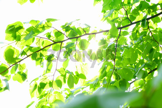 incredible green leaf foliage nature gbackground