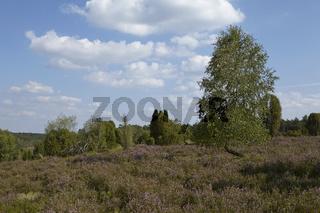 Lüneburger Heide - Heidelandschaft in der Nähe von Egestorf
