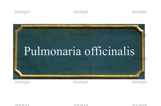 shield pulmonaria officinalis