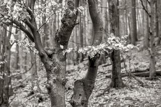 Wald im Maerz