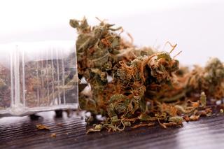 Close up Dried Marijuana Leaves on the Table