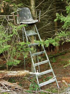 Hochsitz in einem Fichtenwald