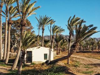 Weißes Haus zwischen Palmen auf Fuerteventura