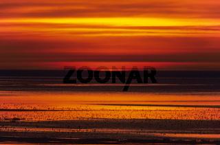 Sonnenuntergang mit Limikolen an der Nordseekueste / Meldorfer Bucht  -  Schleswig-Holstein