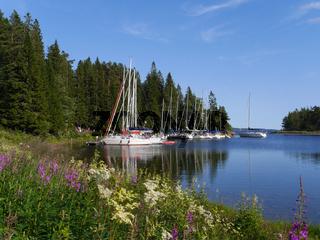 Segelboote vor Anker in der Baggviken