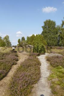 Lüneburger Heide - Schmaler Pfad in der Heidelandschaft