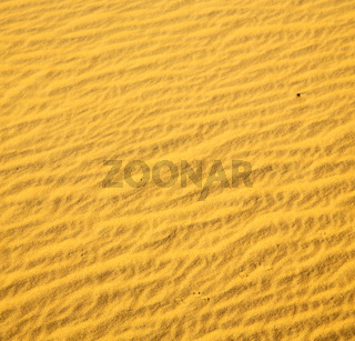 africa the brown sand dune in   sahara morocco desert line