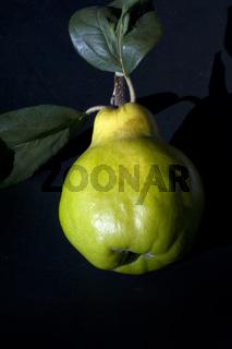 Quitte; Birnenfruechtige, Quitte; Cydonia,