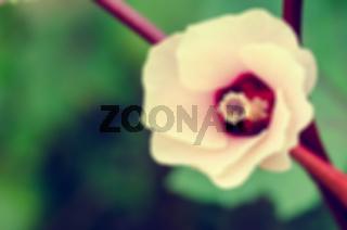 Vintage blur background flower