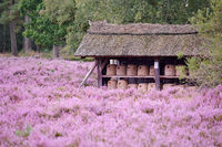 beehive Lueneburg Heath