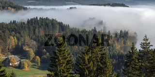 Blick zum Titisee bei Morgennebel im Schwarzwald