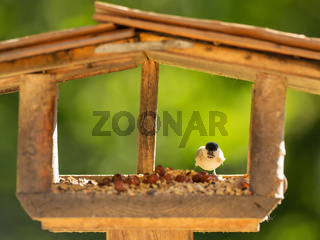 A bird sits in the aviary and eats