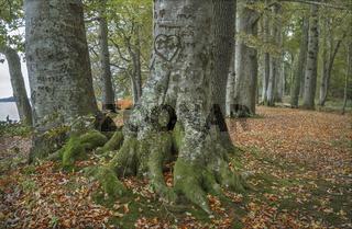 Der Wald an der Schlei
