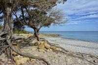 DSC5815JX-Sardinia-Bidderosa Beach Orosei Bay.jpg