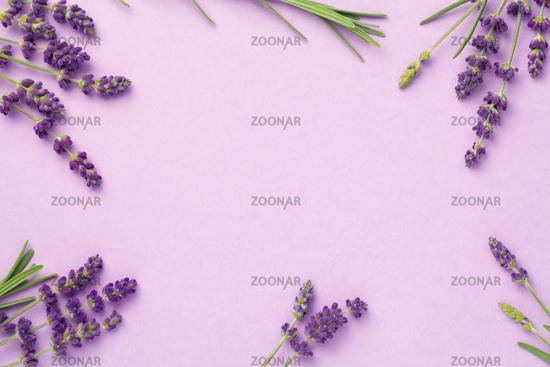 Lavender Flowers On Pink Background