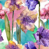 Watercolor colorful amaryllis flowers. Floral botanical flower.Seamless background pattern.