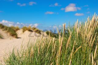 Naturimpession Texel