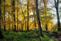 Kaltenhofer Moor in Schleswig-Holstein
