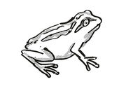 Whistling Tree Frog New Zealand Wildlife Cartoon Retro Drawing