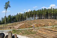 Deforested trees in the forest