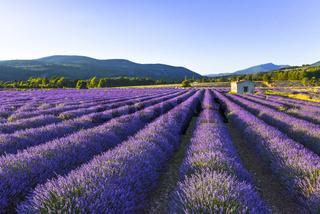 Lavendel Landschaft mit Steinhütte und Bergen