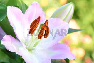 Blumen 513