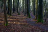 Hiking trail through a beech forest, Pommelsbrunn, Hersbrucker Schweiz, Franconia, Bavaria