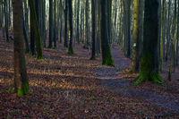 Hiking trail through a beech forest, Pommelsbrunn, Hersbrucker Schweiz, Franconia, Bavaria