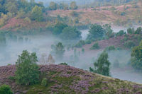 fog in the Lueneburg Heath