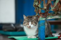domestic cat on the porch