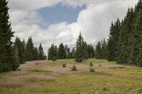 Landscape in Boehmerwald