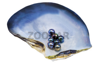 Cultured Pearls inside Oyster Shell mother-of-pearl