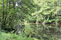 the white Saar - source river of the Saar in France