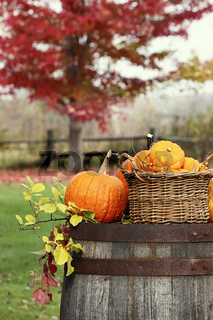 Colorful pumpkins and gourds for autumn harvest