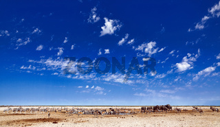 Andrang am Wasserloch, Etosha-Nationalpark, Namibia |  Full house at the waterhole, Etosha National Park, Namibia