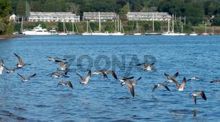 seagulls over Greenwich Bay Harbor Seaport in east greenwich Rhode Island