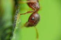 Ameisen-Makro
