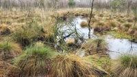 Totes Moor (Dead Moor) - Water surface between grasses, Germany