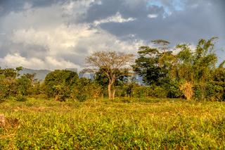 Madagascar traditional wilderness landscape
