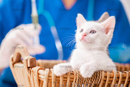 Vet doctor examining kittens in animal hospital