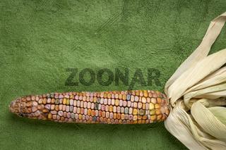 ornamental corn ear abstract