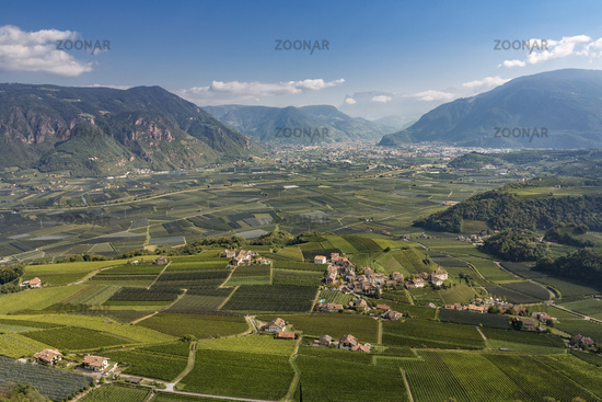 Vineyards in South Tyrol with view to Bolzano, Italy