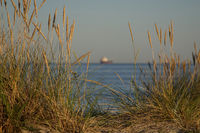 Grasses on the beach at sunset with ship in the background
