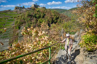 Elderly woman walks on the red wine trail