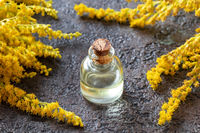 A bottle of goldenrod essential oil and fresh plant