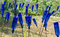 garden decoration with blue empty wine bottles on rods